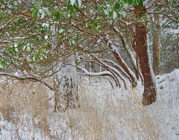 Gabriola Island Forest Details Number 20