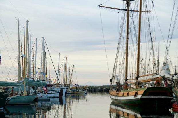 PT morning harbour_DSC6274